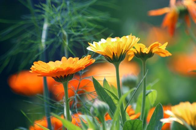 Лекарственные растения, применяемые при заболеваниях кишечника
